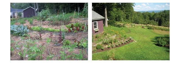 The vegetable garden and back yard