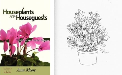 house plants drawing. l houseplants house plants drawing a
