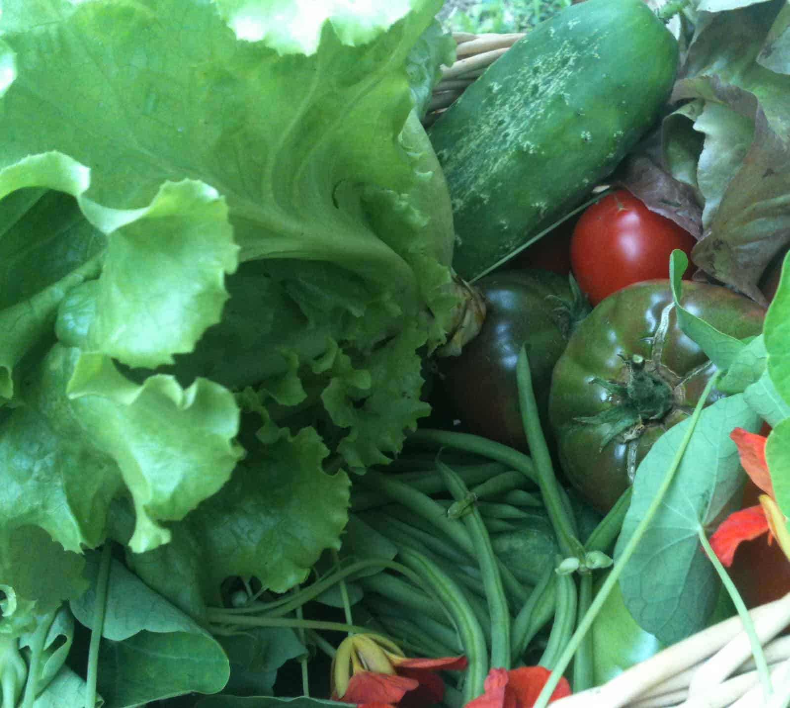 Garden Clean-Up: Rotation and Cover Crops