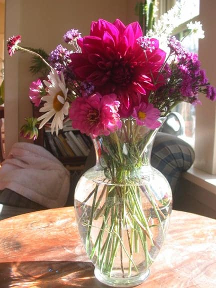 Last Plant Standing: A Snarky Gardener's Take on the Late, Late Bloomers