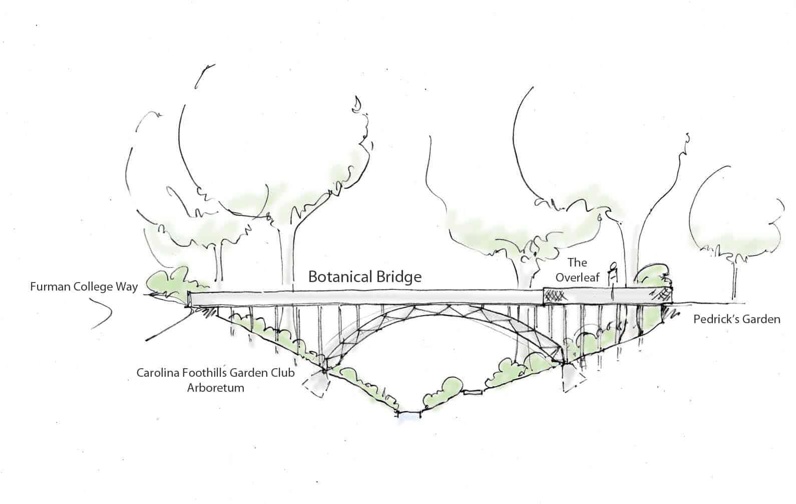 botanical bridge labeled sketch