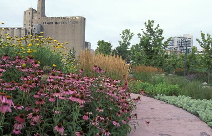 JMMDS, The Toronto Music Garden, Canada Malting Building seen from Courante, photo by Virginia Weiler
