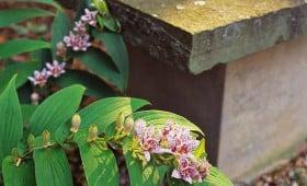 Brookline Japanese Garden