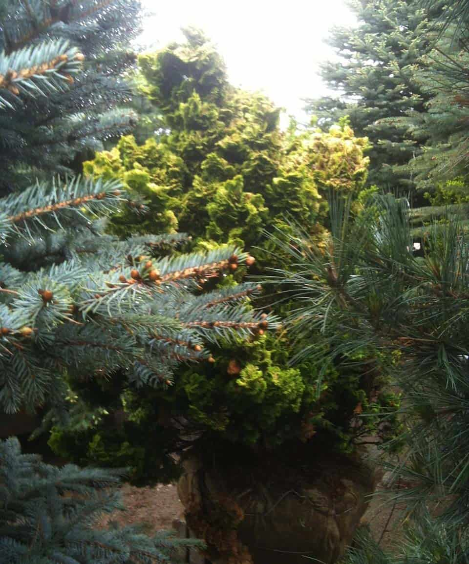 Design Tips: Using Trees in the Home Landscape