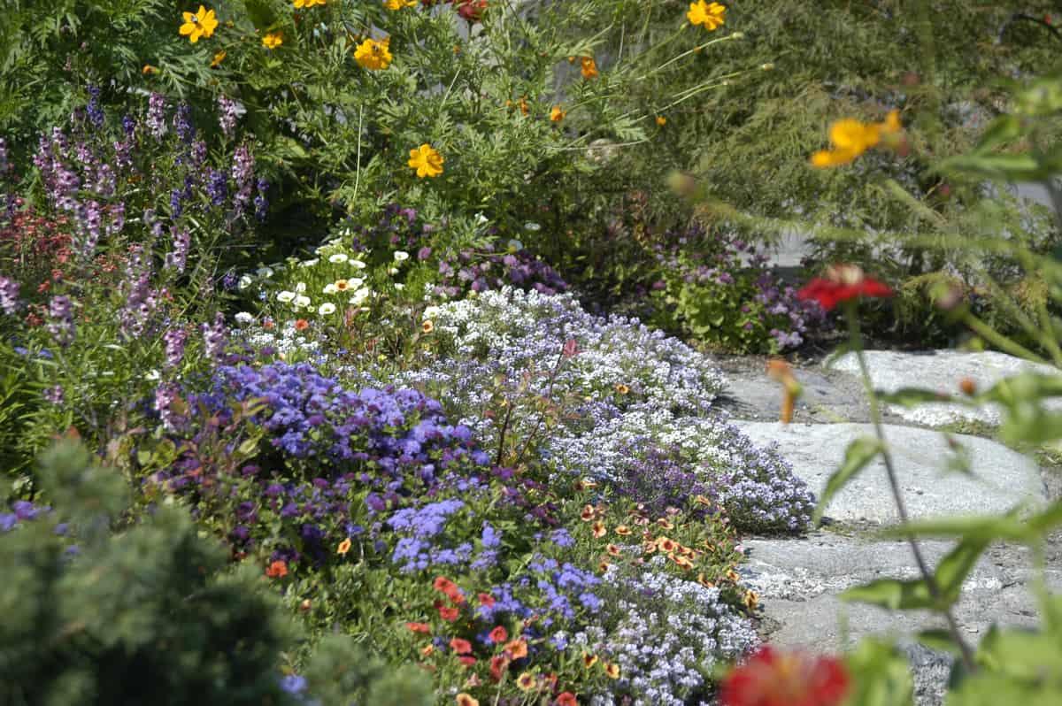 JMMDS Weezies Garden planting detail