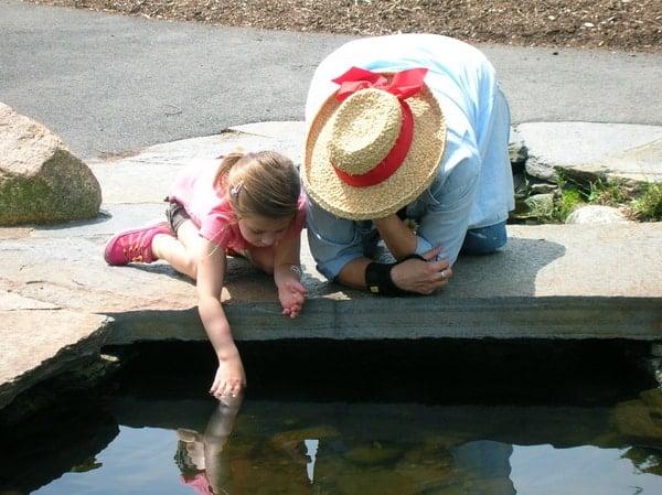 JMMDS Weezies Garden koi pond