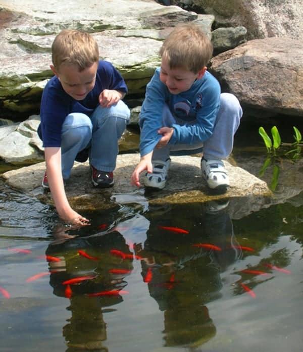 JMMDS Weezies Garden kids at the koi pond