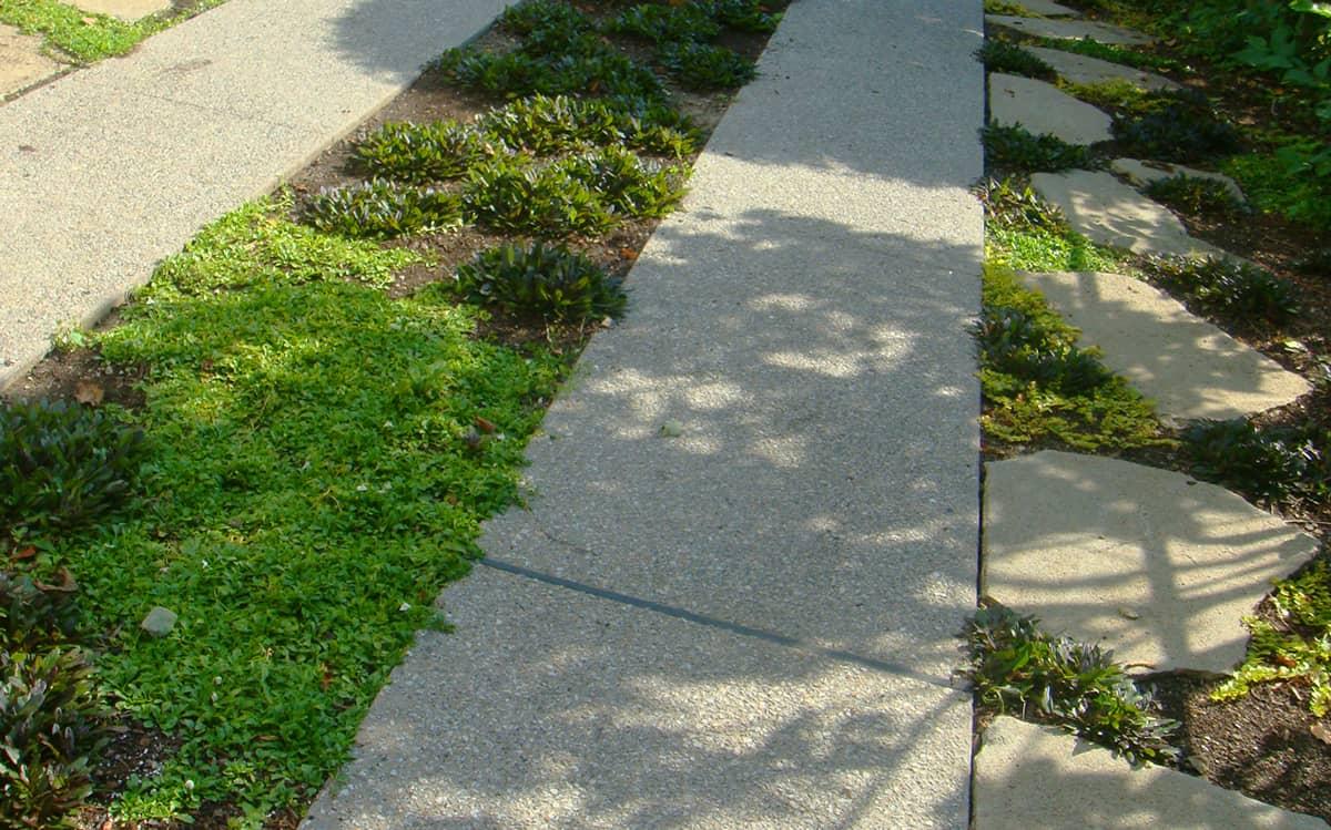 JMMDS-Cambridge-Massachusetts-permeable-driveway_detail