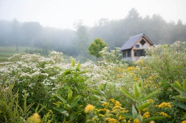 Vermont Wetlands Tour with Julie Moir Messervy & Susan Teare