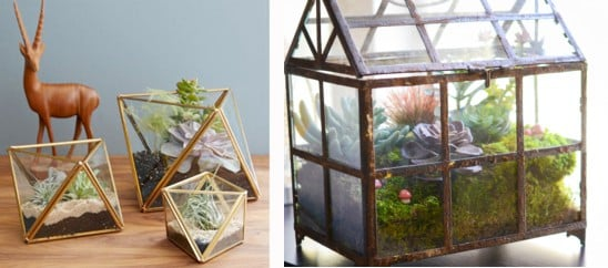 Faceted terrariums from West Elm; DIY terrarium by The Novice Chef.