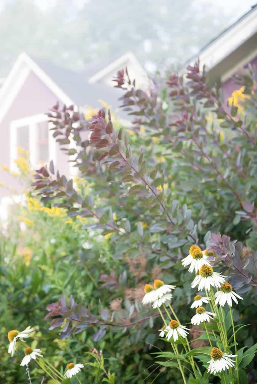 JMMDS_Terraced-Landscape-Vermont_smokebush