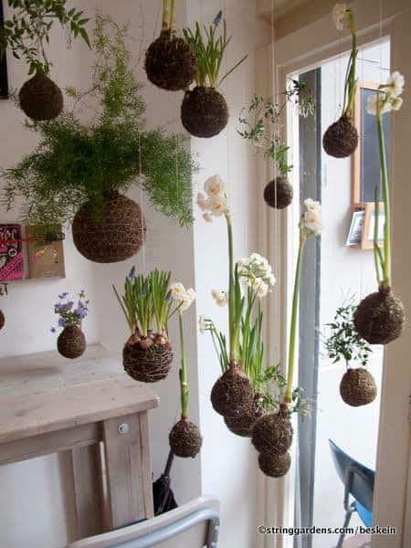 kokedama or hanging string garden