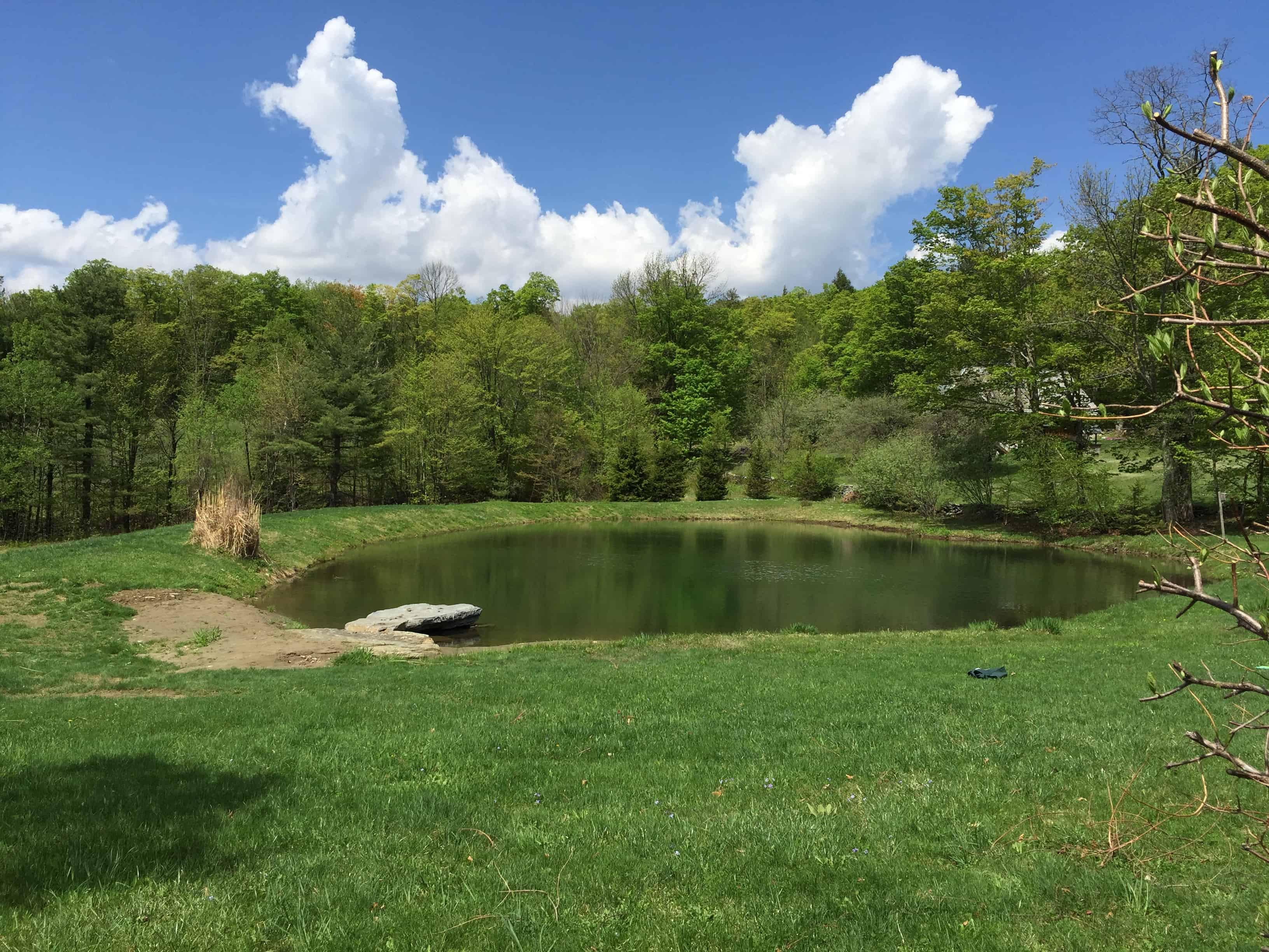 "The ""before"" picture of the pond"