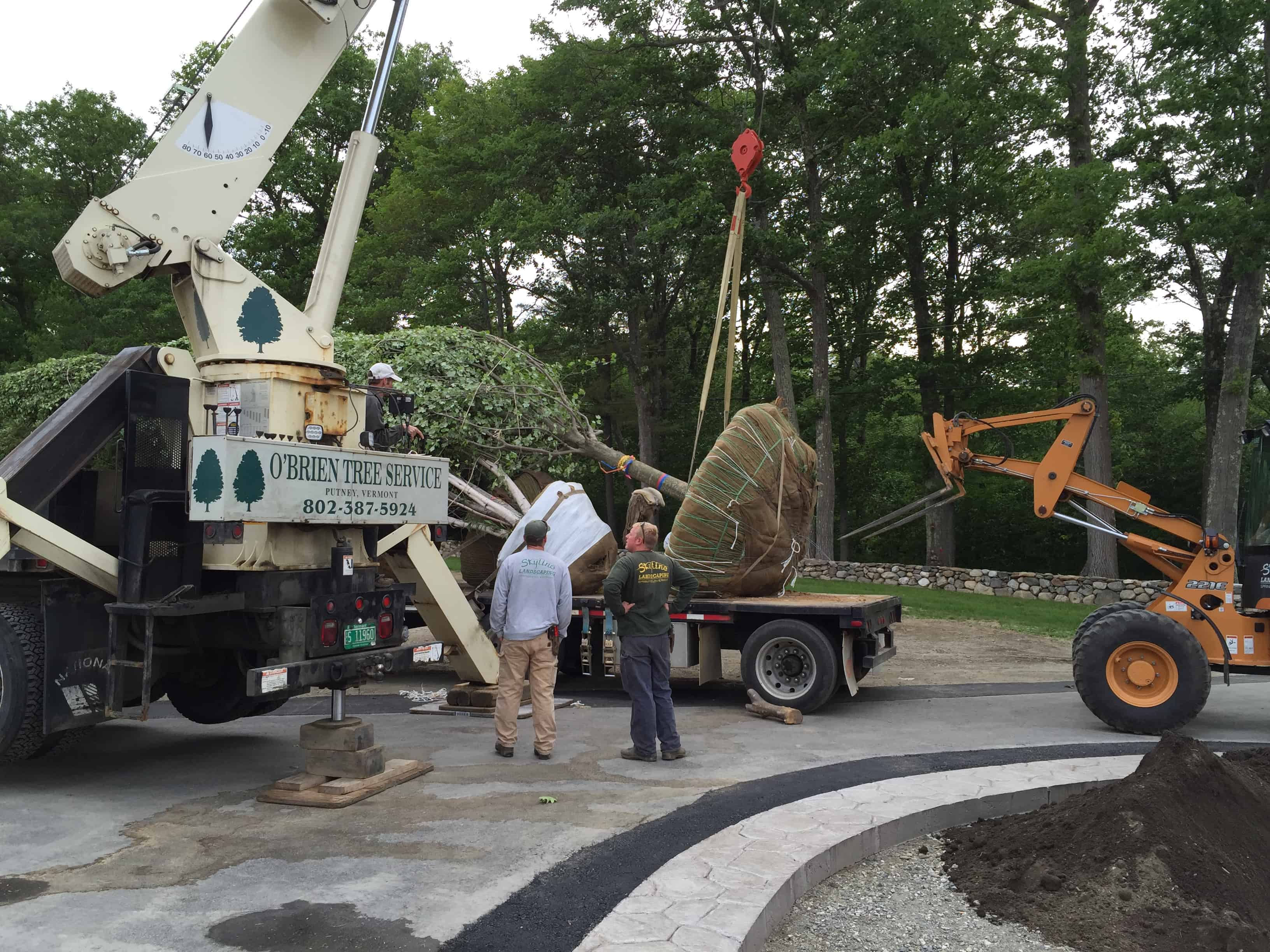A crane and forklift were required to lift and move each tree.