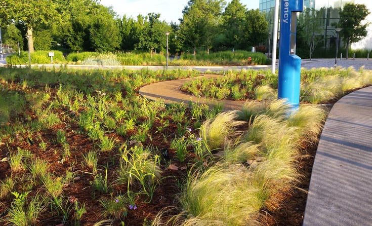 The newly planted Prairie Garden at Myriad Botanical Gardens. Design and photo: JMMDS.