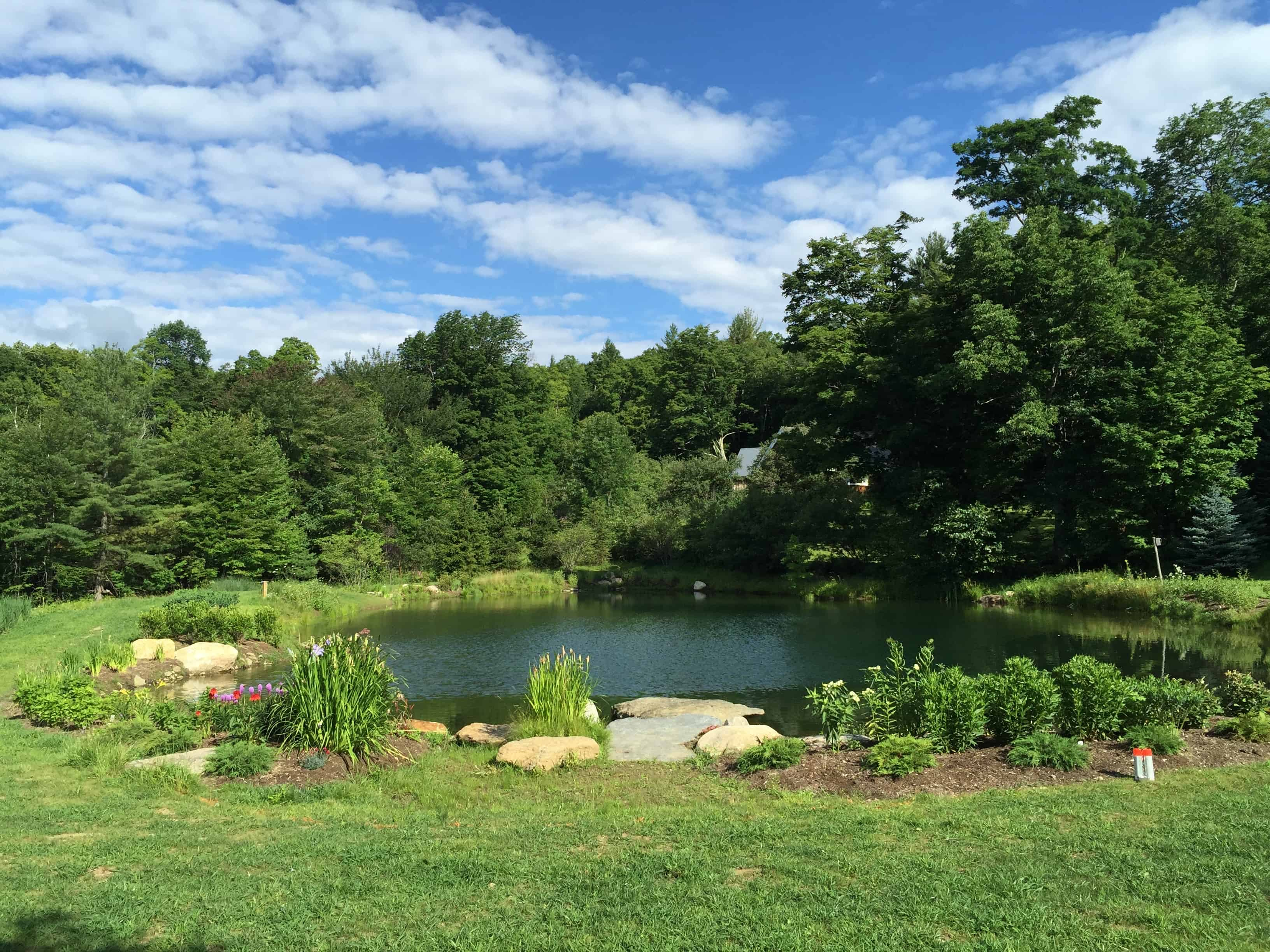 When the native plantings grow in, the pond's edge will be lush and inviting.