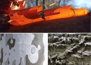 Images of bark from Ned Friedman's Posts from the Collection