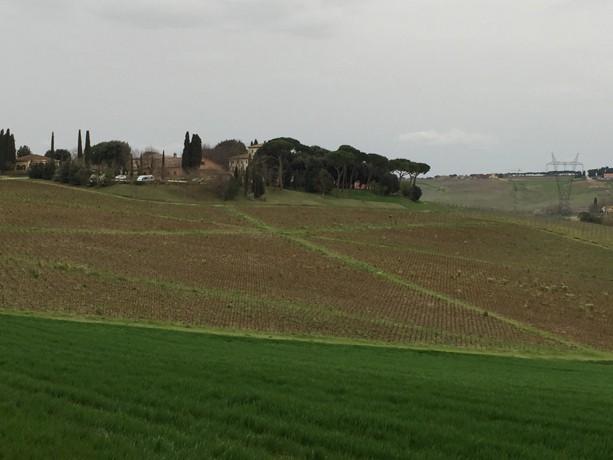 Star-patterned vineyards