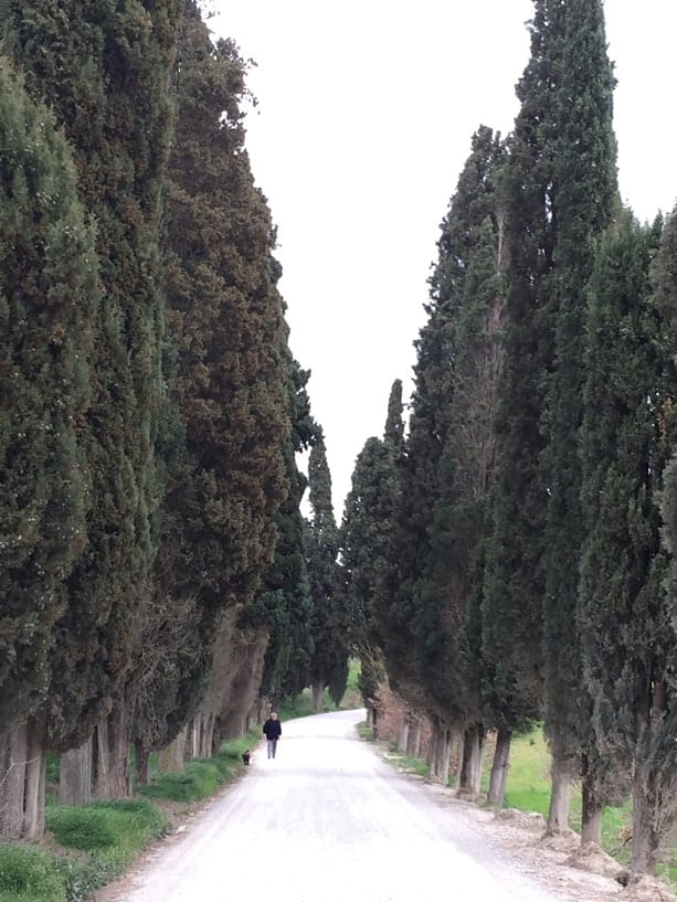 cypress tree allee in Italy