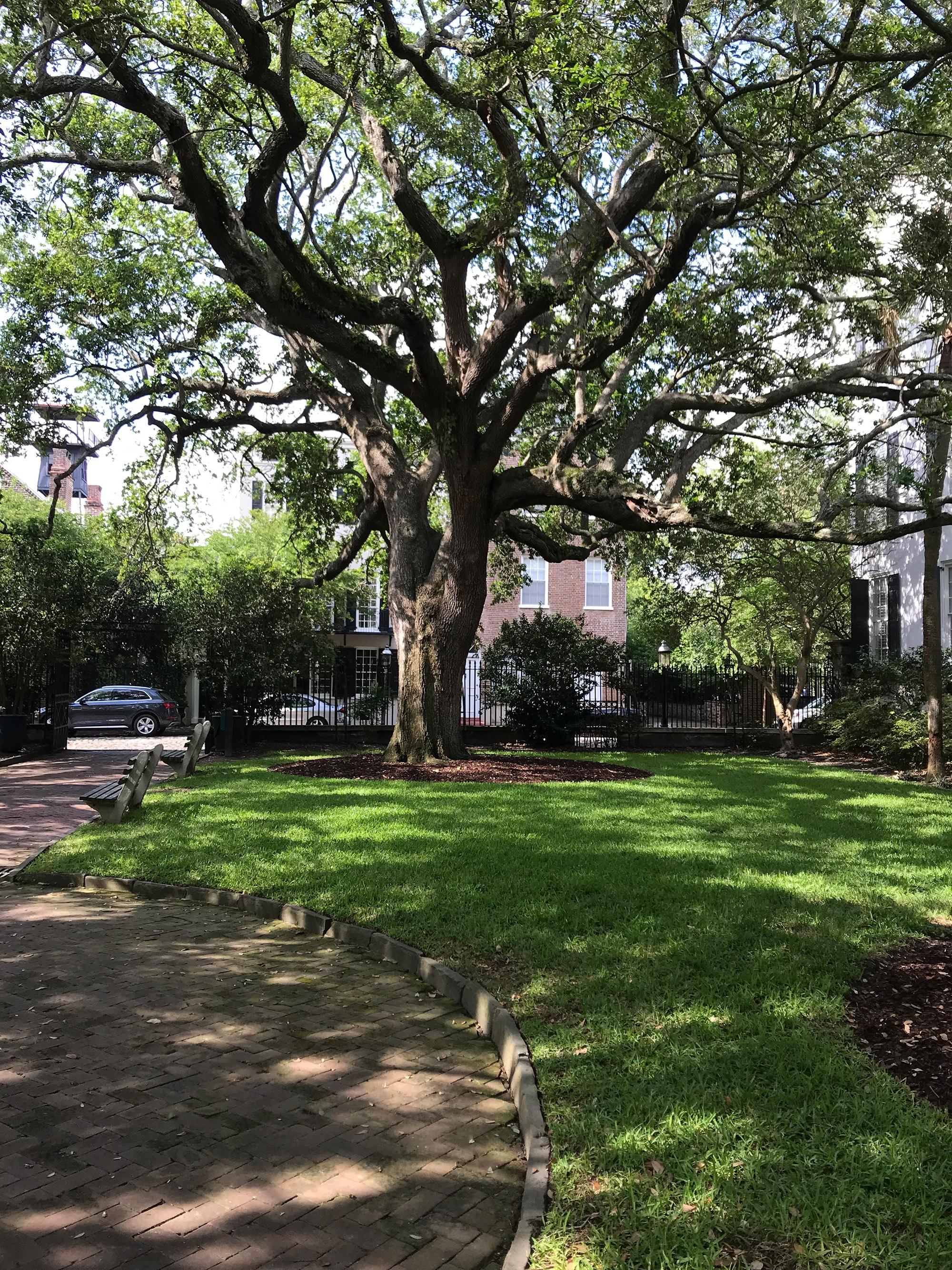 Charleston, South Carolina: A Gardener's Dream City
