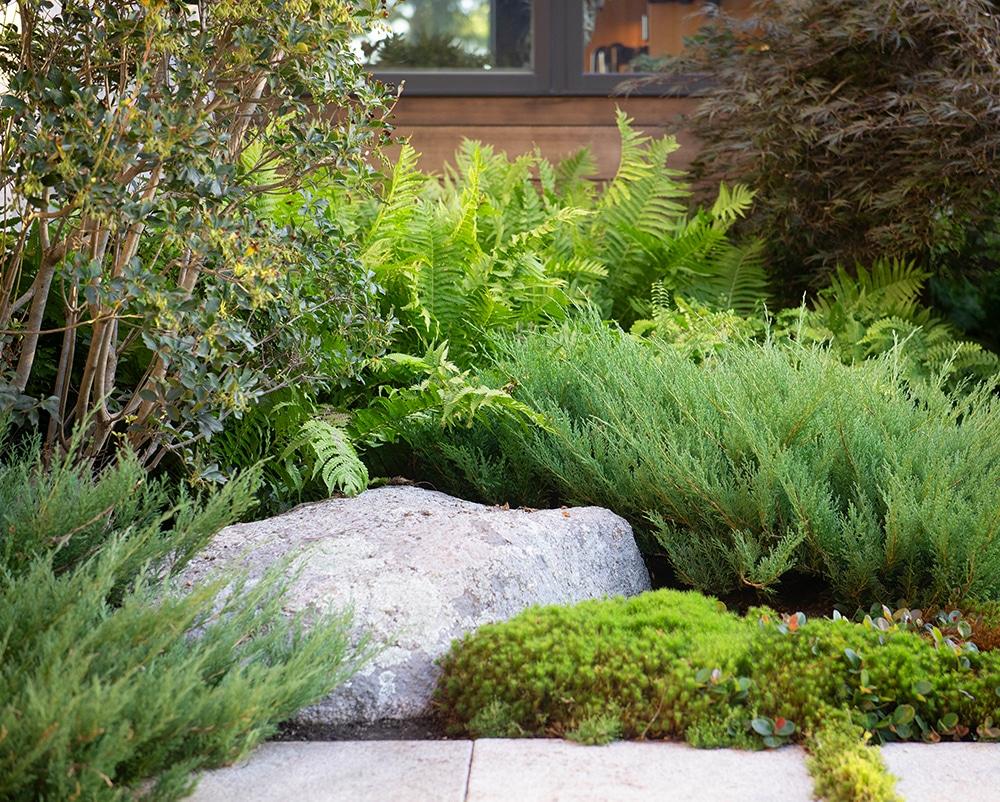 JMMDS-landscape-architecture-maine-coast-boulder-enkianthus-Japanese-Maple-juniper-ferns-moss-detail