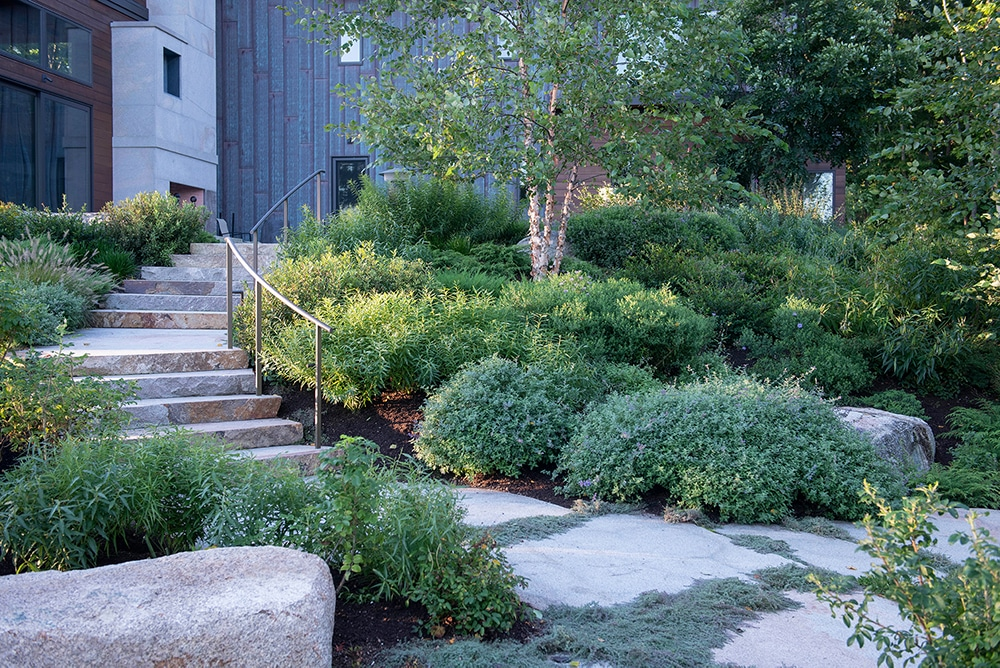 JMMDS-landscape-architecture-maine-coast-modern-home-granite-staircase-curved-steel-rail-stepping-stone-path-river-birch-thyme
